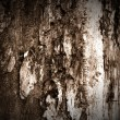 Dark Wood Texture — Stock Photo #2093927