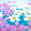 Floating Summer Flowers — Stock Photo #2094441