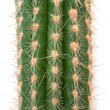 Cactus — Stock Photo #2331463
