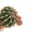 Cactus — Stock Photo #2429121