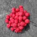 Red Raspberries — Stock Photo