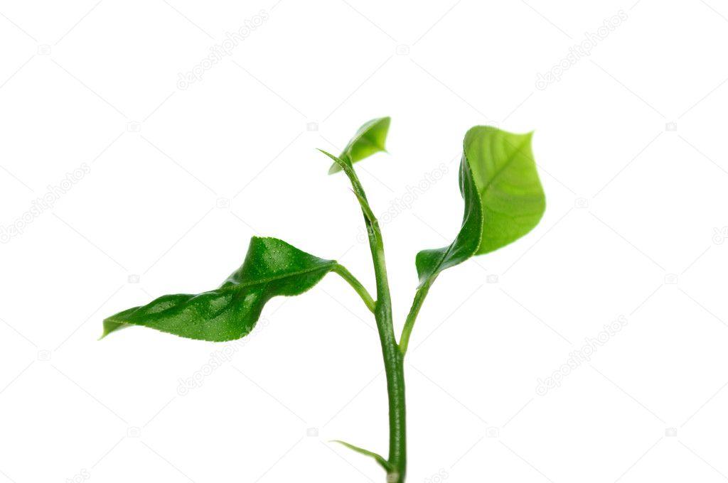 little green plant stock photo digifuture 2643762. Black Bedroom Furniture Sets. Home Design Ideas