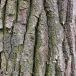 Bark — Stock Photo #1174301