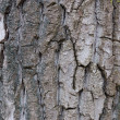 Bark — Stock Photo #1174333