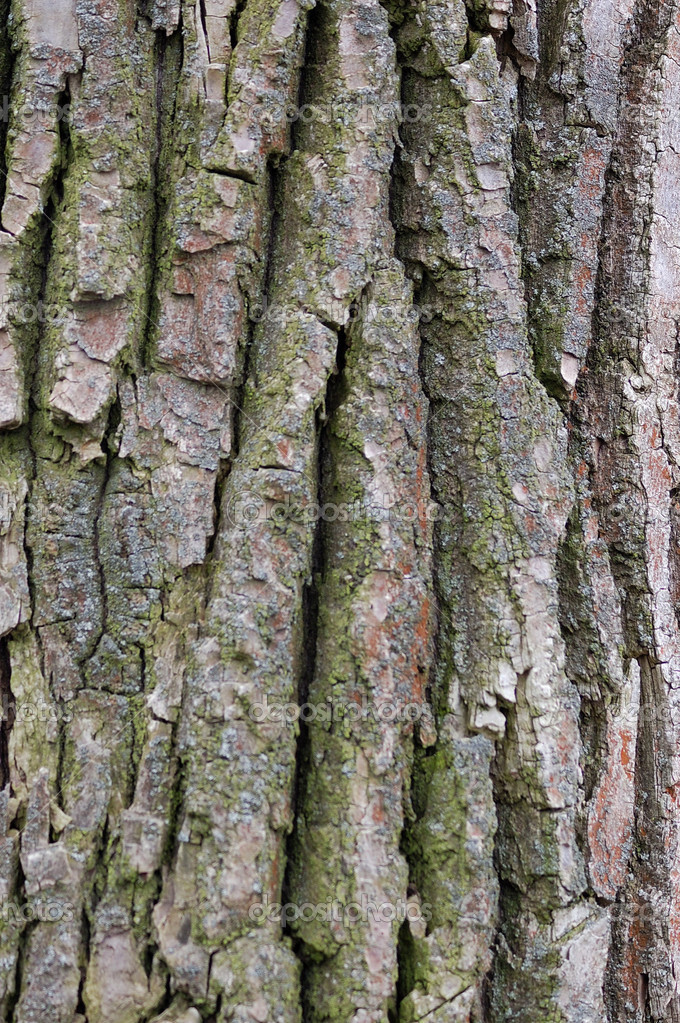 The brown bark of tree — Stock Photo #1174301