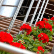 Red flowers on a stair - Stock Photo