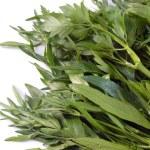 Green parsley — Stock Photo #1184707