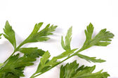 Green parsley on a white background — Stock Photo