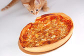 A cat smells pizza — Foto Stock