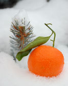 čerstvé mandarine — Stock fotografie