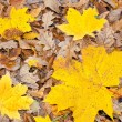 Yellow leaves — Stock Photo #1169573