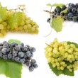 Mixed grape — Stock Photo #1170617