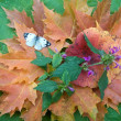 Autumn still life with a butterfly - Stock Photo