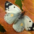 Autumn butterfly - Stock Photo