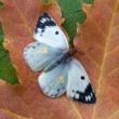 Autumn butterfly on a sheet - Stock Photo