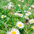 Floral meadow - Stock Photo