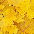 Yellow leaves — Stock Photo #1176915