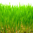 Green grass — Stock Photo #1178265