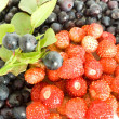 Stock Photo: Forestry blueberries and strawberry