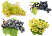 Mixed grape — Stock Photo
