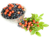 Forestry blueberries and strawberry — Stock Photo