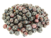 Forestry blueberries — Stock Photo