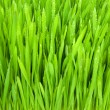 Grass — Stock Photo #1183998