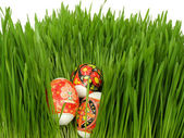 Easter eggs in the grass on a white — Stock Photo