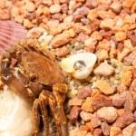 Sea crab — Stock Photo #1194422