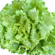 Lettuce — Stock Photo #1203114