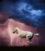 White horse and thunderstorm — Stock Photo