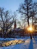 Helsinki park with pond — Stock Photo
