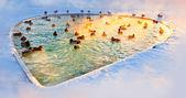 Lagoa de inverno com patos — Fotografia Stock