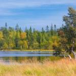 Kuzey güneşli orman — Stok fotoğraf