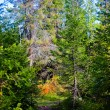 Stock Photo: North sunny forest