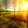 Panorama of forest in a sunny summer day - Stock Photo