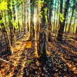 Panorama of forest in a sunny summer day — Stock Photo #2453178