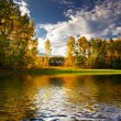 Panorama of forest in a sunny summer day — Foto Stock
