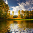 Panorama of forest in a sunny summer day — Stockfoto