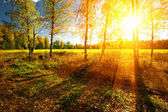 Panorama of forest in a sunny summer day — Stock fotografie