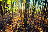 Panorama of forest in a sunny summer day — ストック写真