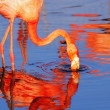 Stock Photo: Pink flamingo in sunshine
