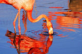 Pink flamingo in sunshine — Stockfoto