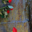 Red roses lie on the varnished board — Foto de Stock