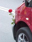Auto e bella lrose — Foto Stock
