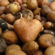 Stock Photo: Potato similar to heart