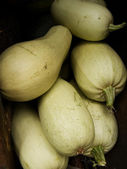 Vegetable marrow — Stock Photo