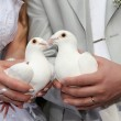 White pigeons is in the hands of newly-w — Stock Photo #1135978