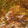 Autumn beech — Stock Photo