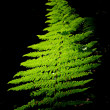 Frond of fern — Stock Photo